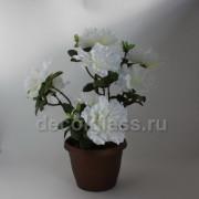 Азалия /кашпо белая 30 см